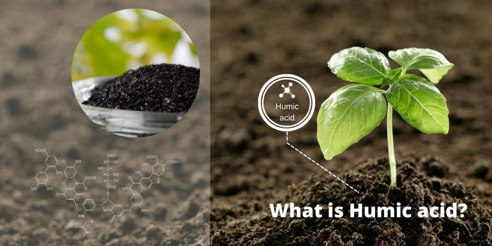 What is Humic acid?