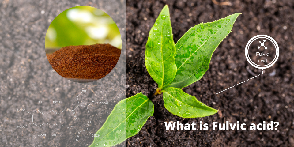 What is Fulvic acid?